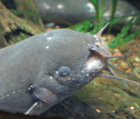 malware corée du nord electric fish